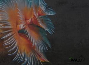 Carta da parati wallpaper Reef
